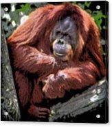 Cartoon Comic Style Orangutan Sitting In Tree Fork Acrylic Print