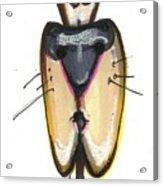 Cartoon No 48 Acrylic Print
