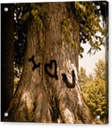 Carve I Love You In That Big White Oak Acrylic Print