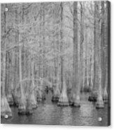 Carvers Cypress Ir Acrylic Print