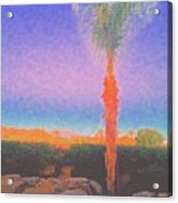 Casapaz  Palm At Dawn Acrylic Print