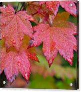 Cascade Autumn Leafs 5 Acrylic Print