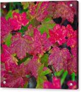 Cascade Autumn Leafs 7 Acrylic Print