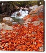 Cascade Brook Acrylic Print
