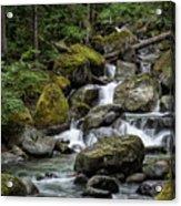 Cascade In The Rainforest Acrylic Print