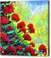 Cascade Of Geraniums Acrylic Print