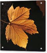 Cascade Orange Acrylic Print