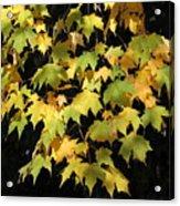 Cascading Leaves Acrylic Print