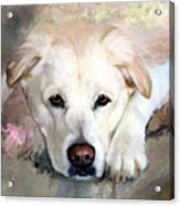 Casey Gone But Not Forgotten Acrylic Print