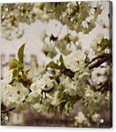 Castle Blossoms Acrylic Print