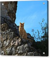 Castle Cat Acrylic Print