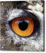 Castle In The Owl's Eye Acrylic Print