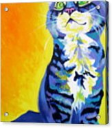 Cat - Here Kitty Kitty Acrylic Print by Alicia VanNoy Call