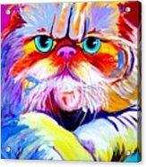 Cat - Tigger Acrylic Print by Alicia VanNoy Call