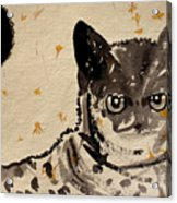 Cat 3 Acrylic Print