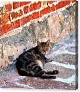 Cat Against Stone Acrylic Print