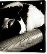 Cat And Bat Acrylic Print by Andee Design