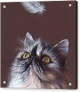 Cat And Feather Acrylic Print