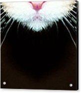 Cat Art - Super Whiskers Acrylic Print