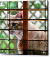 Cat At The Window Acrylic Print