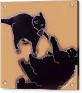 Cat Attack 4  Acrylic Print