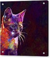 Cat Background Image Cute Red  Acrylic Print