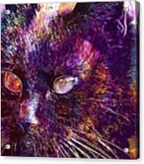Cat Black View Close  Acrylic Print