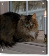 Cat By Candlelight Acrylic Print