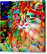 Cat By Fauvism Acrylic Print