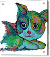 Cat For Love Acrylic Print
