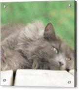 Cat Chillax Acrylic Print