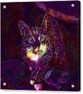 Cat Contemporary Design Brown  Acrylic Print