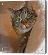 Cat Desire. Acrylic Print