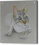cat drawing - Jackson Acrylic Print