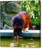 Cat Drinking In Picturesque Garden Acrylic Print
