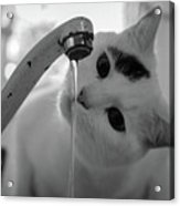 Cat Drinking Water From Faucet Acrylic Print by A*k