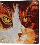 Cat Eye Acrylic Print by Shahid Muqaddim