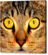 Cat Face Portraiture Acrylic Print