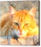 This Cat Has Been Waiting A Long Time For The Mouse  Acrylic Print