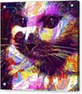 Cat Head Face Macro Close Up  Acrylic Print