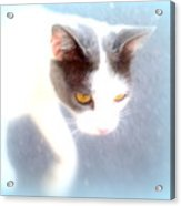 When You Are A Cat You Have A Different Perspective   Acrylic Print