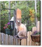 Cat In A Birdbath Acrylic Print