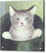 Cat In A Bucket Acrylic Print