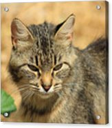 Cat In A Yard Acrylic Print