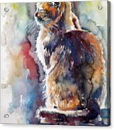 Cat In Backlight Acrylic Print