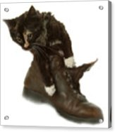 Cat In Boot Acrylic Print