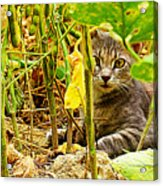 Cat In Field Acrylic Print