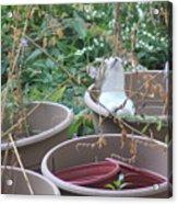 Cat In Flowerpot Acrylic Print