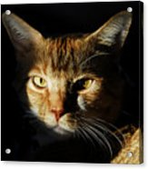 Cat In Shadow Acrylic Print