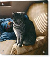 Cat In Shadows Acrylic Print by Carol Wilson